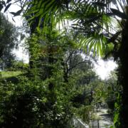 subtropisch